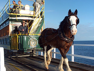 Victor Harbor           horse drawing tram