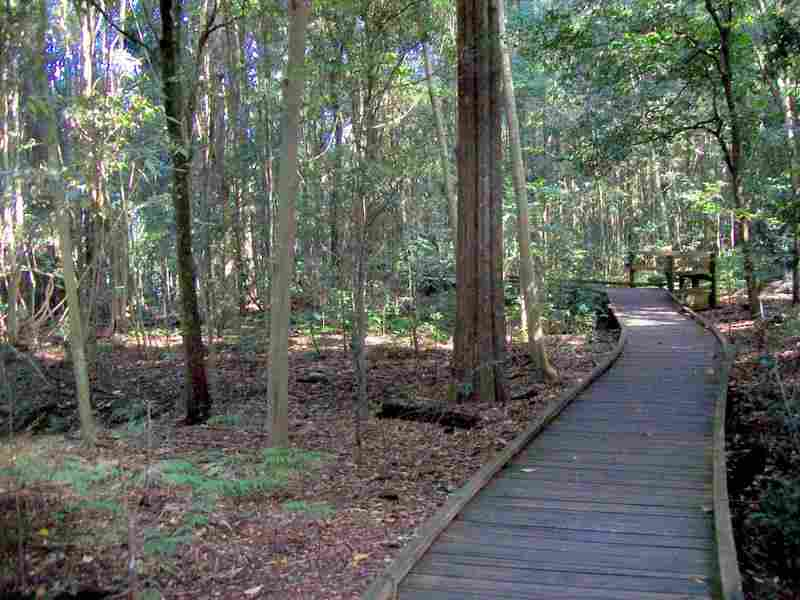Wingham Brush walk