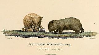 King Island Wombats