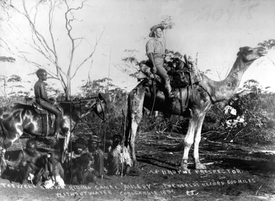 camel 1895
